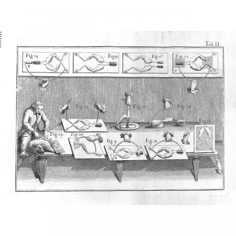 Galvanisches Experiment